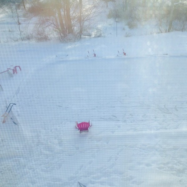 Dog Prints in the Backyard Rink