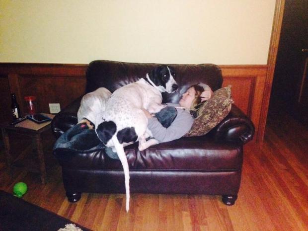 Pixie the lap dog